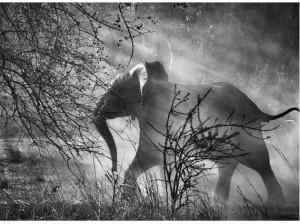 salgado-elefante