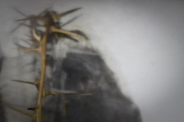 Roberto Kusterle: La sacra tovaglia