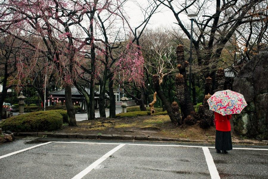 © Copyright Shin Noguchi