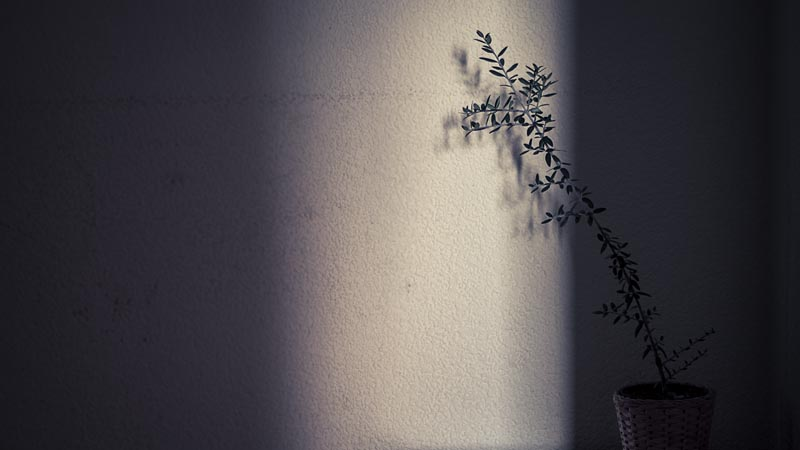 © Copyright Cristiana Gasparotto