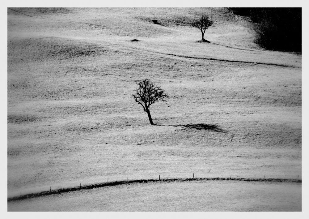 © Copyright Massimiliano Lardi