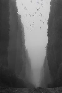 """""""Viaggio nelle strade abbandonate"""" © Christian Brogi"""