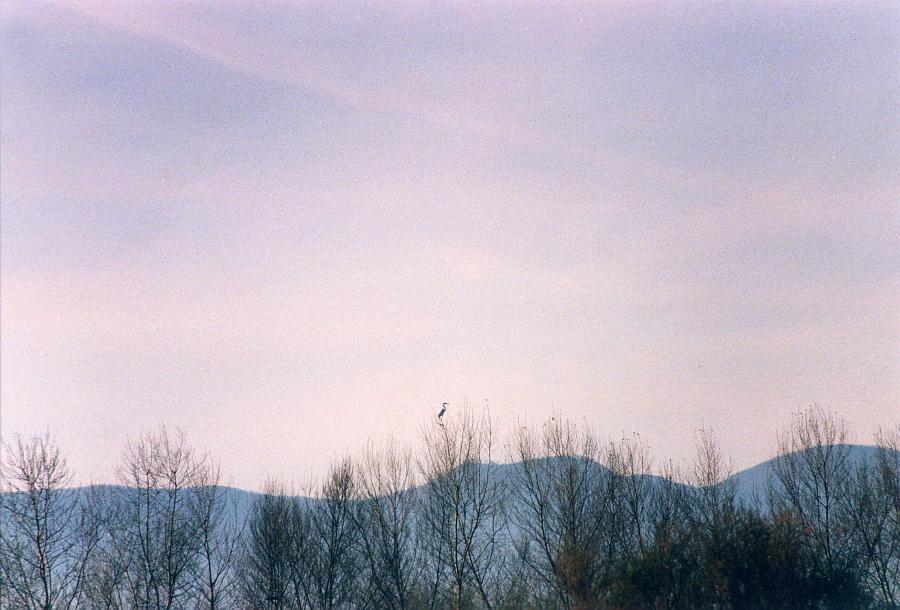 """Bluebird"" © Debora De Bartolo"