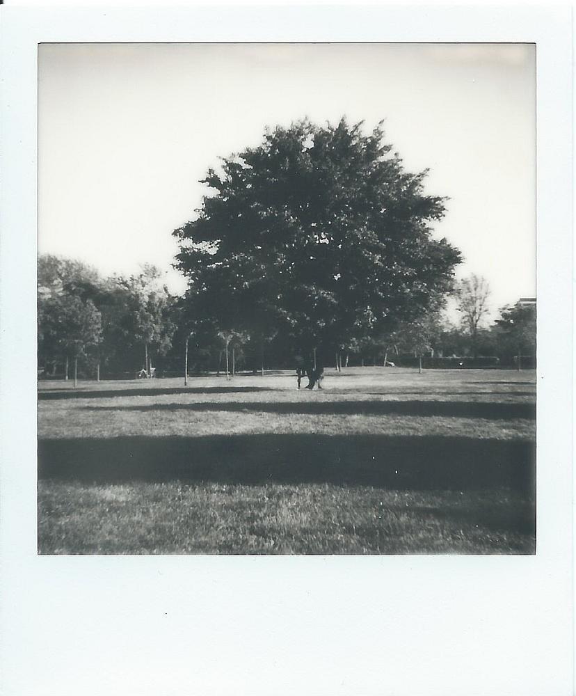 """Tree"" © Luca Corradi"