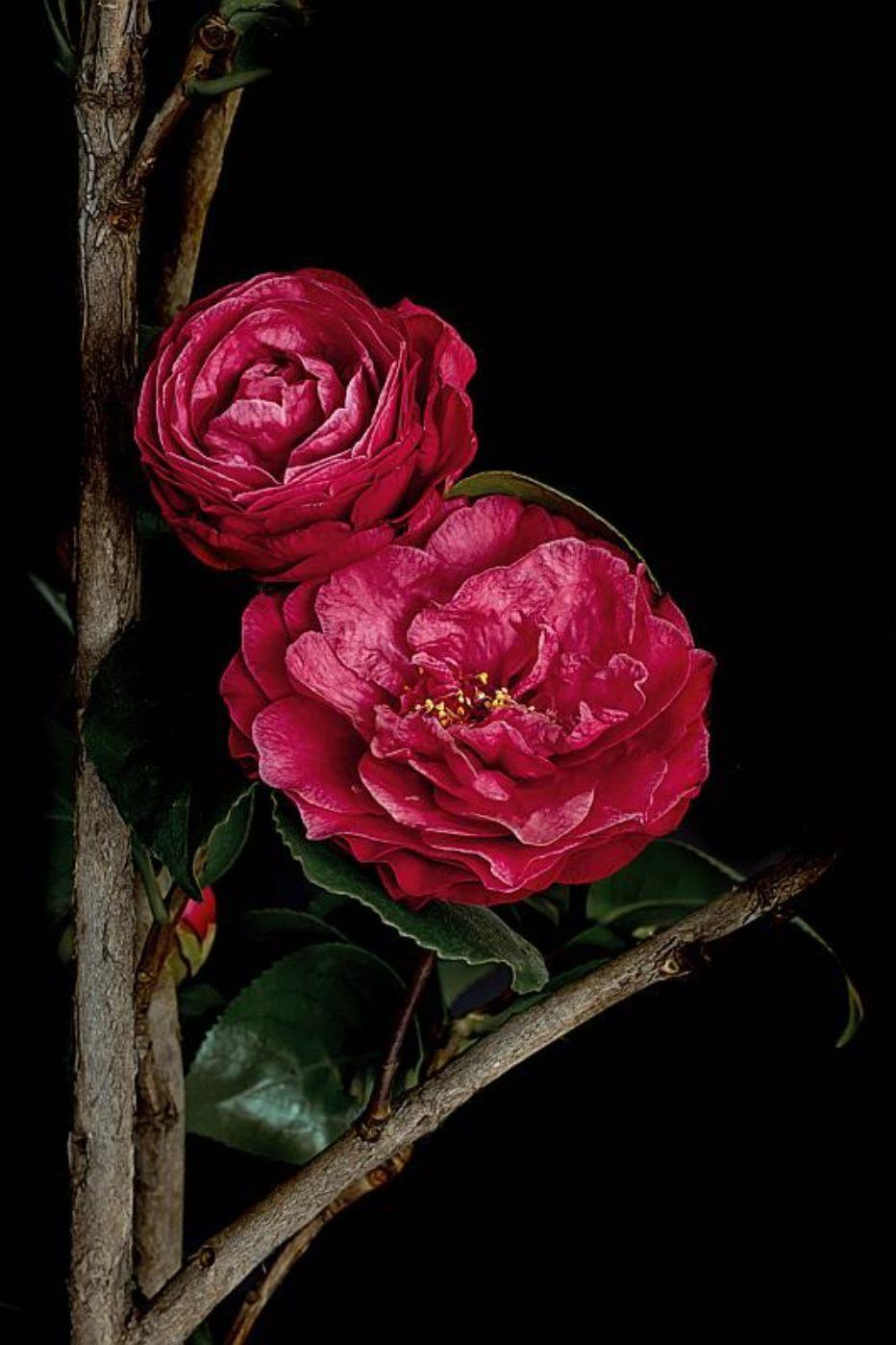 """""""Les fleurs du mal"""" di Antonella Giuliano"""
