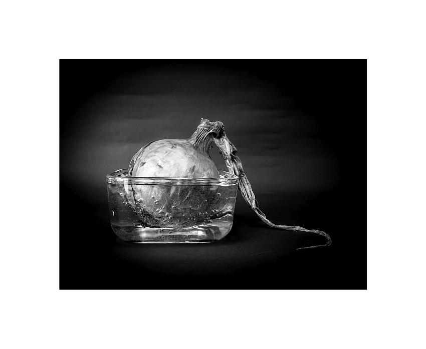 © Gaetano Brunetti