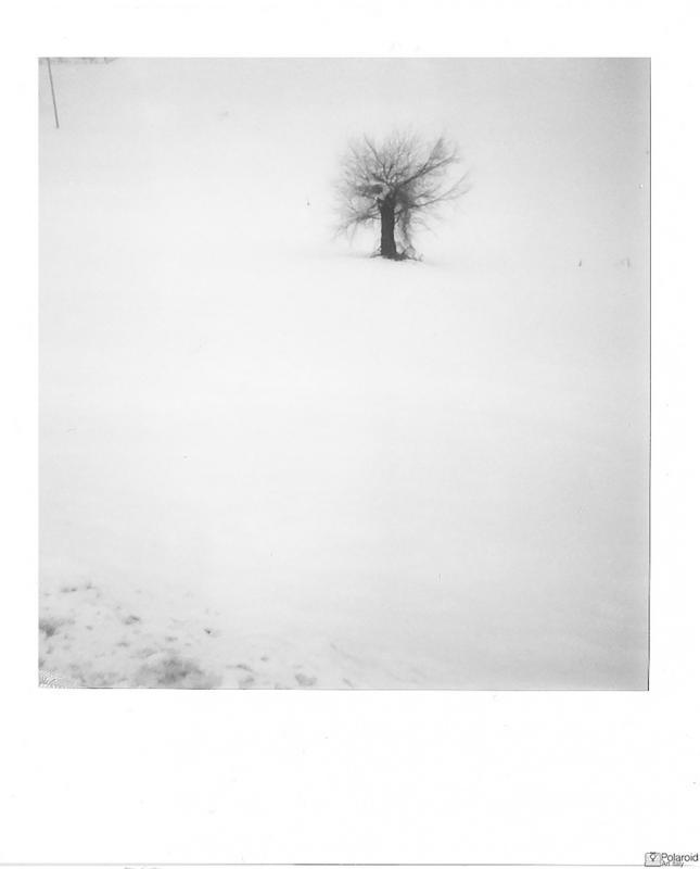 """White"" © Giovanna Santinolli"