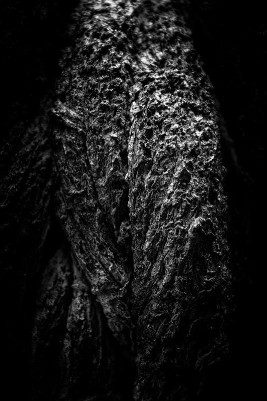 © Willy Vecchiato