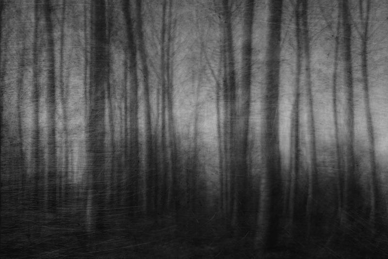 """Dark trees"" © Simona Nobili"
