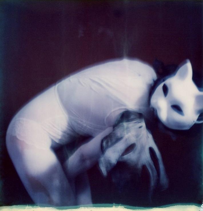 """""""Shiro Neko/The White Cat"""" by Carmen Palermo"""