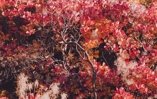 """""""Novembre"""" di Chiara Cattaruzzi"""